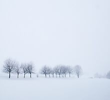 Snowstorm Trees by Heath Carney