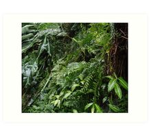 Tropical Forest 07 Art Print