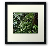 Tropical Forest 07 Framed Print