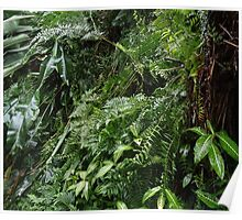 Tropical Forest 07 Poster