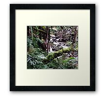 Tropical Forest 09 Framed Print