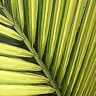 A Single Palm Frond by Sue Cotton