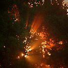 The Burning Bush by paintin4him