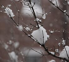 Snow on a branch by Writhe