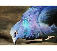 Taubenleben - Pigeon Life   Photographic Print