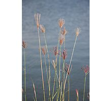 Grass blowing in the wind Photographic Print