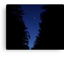 Venus In The Trees Canvas Print