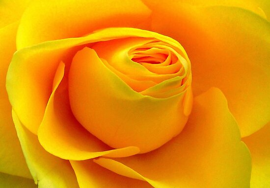 Yellow Folds .. by Kate Towers IPA