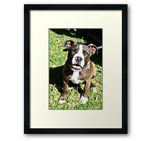 Dog. Framed Print