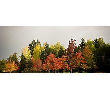 urban forest Photographic Print