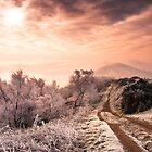 Big Freeze - Winter morning on Malvern Hills by Jan  Sedlacek