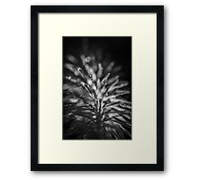 After the rain... Framed Print