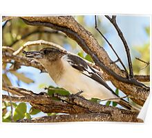 Young Butcher Bird with Catch Poster