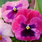 Pink Pansies by Caren Grant