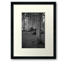 Black and White Forest Framed Print