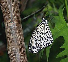 Paper Kite by Brenda Sikes