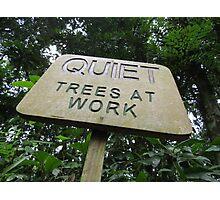 Quiet Trees At Work Photographic Print