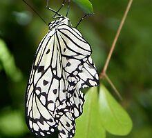 Paper Kite II by Brenda Sikes