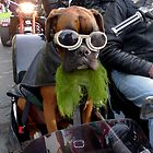 Lucy on Saint Patricks Day parade #1 by ragman
