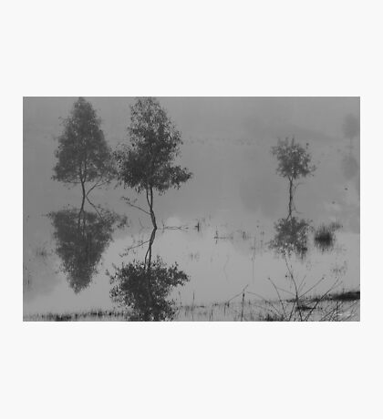 Something to reflect on  Photographic Print