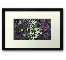 Primroses in the Undergrowth Framed Print