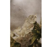 Bells Photographic Print