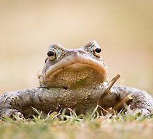 Toad by cjdolfin