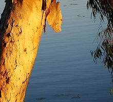 Sunset on a paperbark tree by jade77green