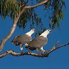 Eagle Song by byronbackyard