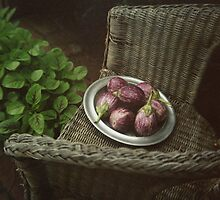 Eggplants  by lucindadodds