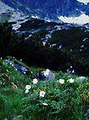 Flowers/ mountains by schizomania