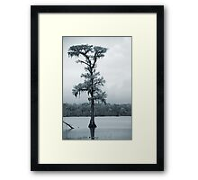 Blue Cypress Framed Print