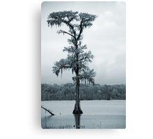 Blue Cypress Canvas Print