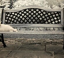 Sit By Me? by Noha