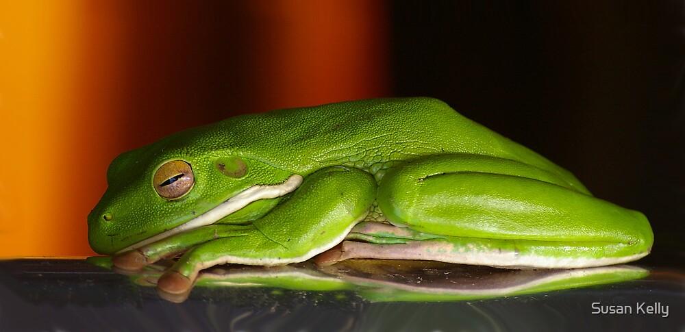 Frog dreams by Susan Kelly