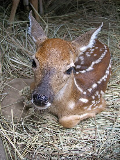 "The ""CUTE""  In Cuteness! by NatureGreeting Cards ©ccwri"