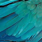 Turquoise Feathers Merchandise by Lisa Knechtel
