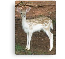 Fallow Deer Fawn Canvas Print