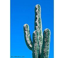 Saguaro Cactus Photographic Print