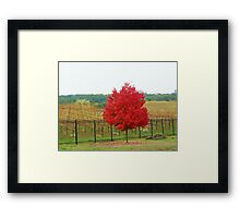 Wine Vineyard Framed Print
