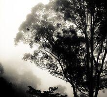 Through the Fog, Zomba, Malawi by Tim Cowley