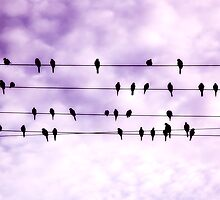 Birds on a wire.... by Lynette Higgs