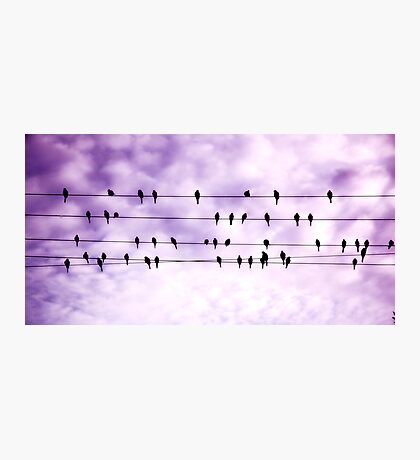 Birds on a wire.... Photographic Print