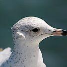Bugsy Seagull by Donna Adamski