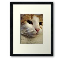 Sweet Fella Framed Print