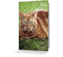 A Handsome Tigger Greeting Card