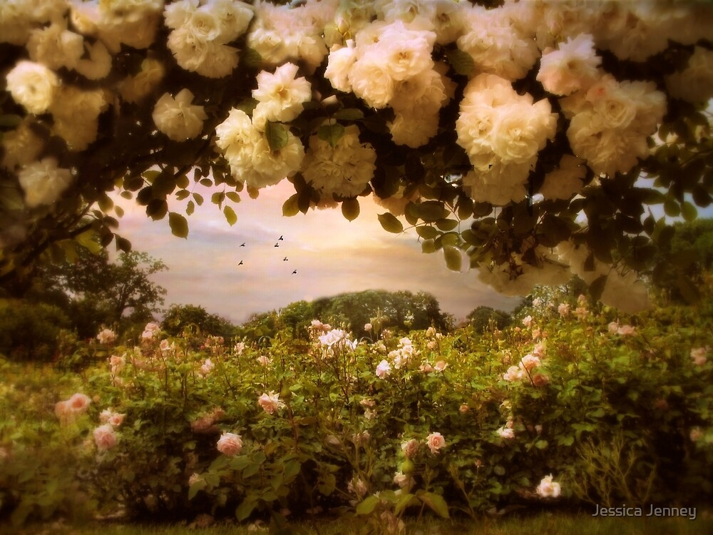 Roses Abound by Jessica Jenney