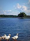 Geese enjoying a day at the Lake by Susan S. Kline