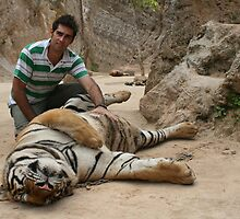 Tiger Tummy Rub by Steve E
