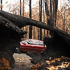 Burnt fallen trees after Feb 7 '09 bushfires in West Gippsland, Victoria by Bev Pascoe
